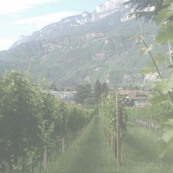 Schrader Cabernet Sauvignon 2001