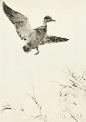 Frank Weston Benson (American, 1862-1951)      Springing Teal