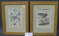 Six Framed Mycological Prints