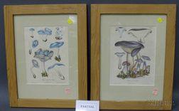 Six Framed Mycological Prints