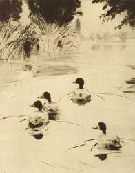 Frank Weston Benson (American, 1862-1951)  Broadbills