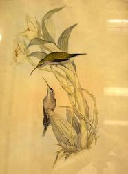 Two Gould and Richter Ornithological Prints
