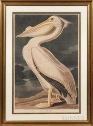 Audubon, John James (1785-1851),   American White Pelican