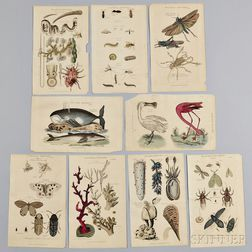 Nine Natural History Book Plates