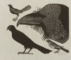 Leonard Baskin (American, 1922-2000)  Lot of Four Images from A LITTLE BOOK OF NATURAL HISTORY:  Beetle, Crows, Flea
