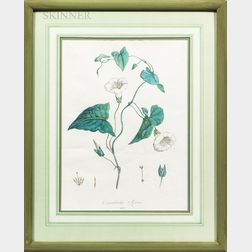 Eight Framed Botanical Prints: Pierre-Joseph Redouté (French, 1759-1840), Five Engravings of Roses, One of Freesia; Jean Louis Prevost