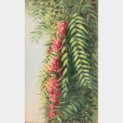 Ellen Francis Burpee Farr (American, 1840-1907)      Pepper Tree