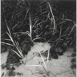 Harry Callahan (American, 1912-1999)      Lake Michigan (Reeds)