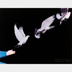 "Harold E. ""Doc"" Edgerton (American, 1903-1990)      Pigeon Release"