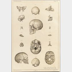 Laskowski, Sigismond (1841-1928) Anatomie Normale du Corps Humain, Atlas Iconographique.