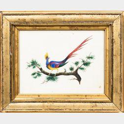 American School, 19th Century      Bird of Paradise