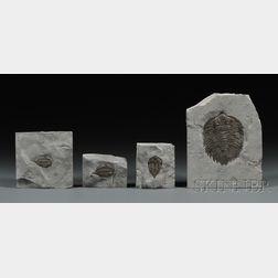 Four Trilobites