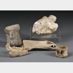 Collection of Bone Fossils