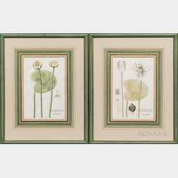 Continental School, 18th/19th Century      Two Botanical Prints of Waterlilies