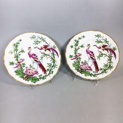 Pair of Chelsea-type Porcelain Tropical Bird Plates