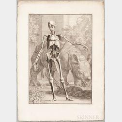 Albinus, Bernhard Siegfried (1697-1770) Tabulae Sceleti et Musculorum Corporis Humani.