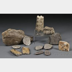 Collection of Fossils