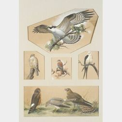 Roger Tory Peterson (American, 1908-1996)  Birds of Prey: Studies of Hawks and Falcons