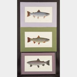 Peter Thompson (American, 20th Century)    Lot of Three Illustrations for The Game Fishes of New England and Southeastern Canada