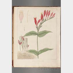(Botanical Illustration, Medicine), Barton, William P.C., Presentation Copy