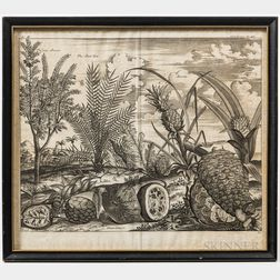 Two Framed Engravings of Fruits and Fruit Trees of Indonesia