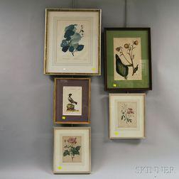 Five Framed Botanical and Ornithological Prints