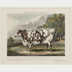 John Harris (British, c. 1791-1873), After William Henry Davis (British, c. 1783-1865), The Everingham Short Horned Prize Cow, from For