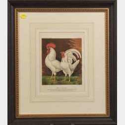 Six Chromolithographs of Prize Poultry