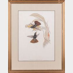 Gould, John (1804-1881) Two Hummingbird Prints.
