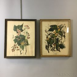 Two Framed Audubon Carolina Parrot   and Black & Yellow Warbler   Prints