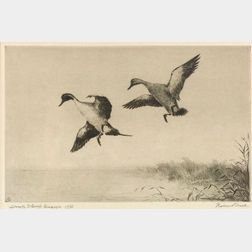 Roland H. Clark (American, 1874-1957)  Duck Stamp Design (Northern Pintails)