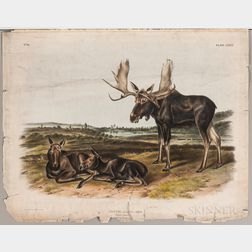 Audubon, John James (1785-1851) Ten Folio Quadruped Prints.