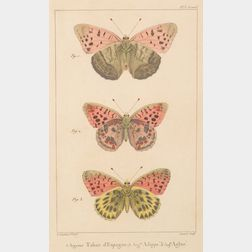 Six Framed Hand-colored Engravings of Butterflies and Moths