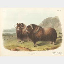 Audubon, John Woodhouse (1812-1862)