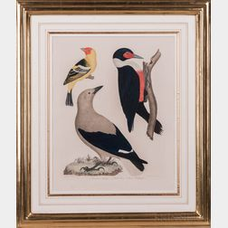 Wilson, Alexander (1766-1813) Two Hand-colored Ornithological Plates from American Ornithology.
