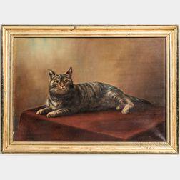 American School, Early 20th Century      Portrait of a Tabby Cat