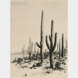 George Elbert Burr (American, 1859-1939)      Giant Cactus - Tucson - Arizona