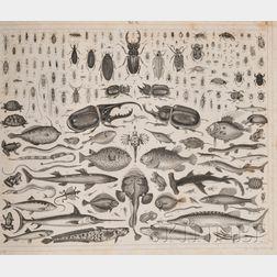 (Natural History), Heck, Johan Caspar (b. 1740)