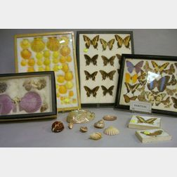 Small Early to Mid-20th Century Collection of Mounted Butterflies and Sea Shells.