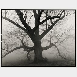 B.A. King (Canadian/American, b. 1934)      The Great Oak