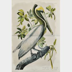Audubon, John James (1785-1851) Brown Pelican.