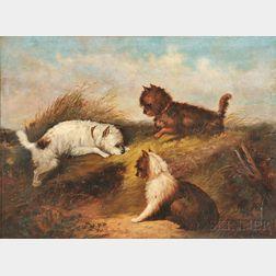 George Armfield (British, b. circa 1808-1893)       Terriers Ratting.