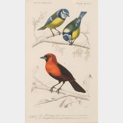 Six Framed French Hand-colored Ornithological Engravings