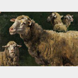 School of Rosa Bonheur (French, 1822-1899)      Studies of Sheep