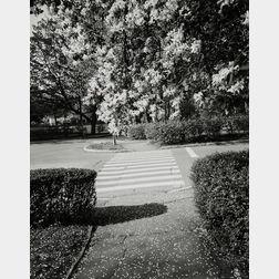 Nicholas Nixon (American, b. 1947)      Waverly Street, Brookline