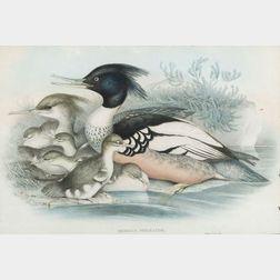 John Gould (British, 1804-1881) and Henry Constantine Richter (British, 1821-1902) Lot of Four Ornithological Prints Depicting Shorebir