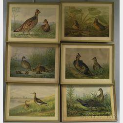 Set of Six Framed Alexander Pope Bird-themed Chromolithographs