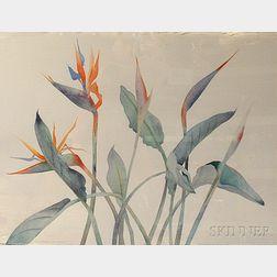 Susan Headley Van Campen (American, b. 1951)      Bird of Paradise, Bermuda