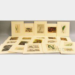 Natural History Prints