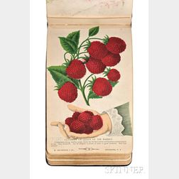 The Specimen Book of Fruits, Flowers, and Ornamental Trees. Carefully Drawn and Colored from Nature for the Use of Nurserymen.